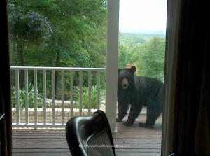Bear2009