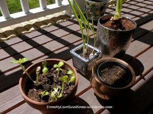 plants4.20.14