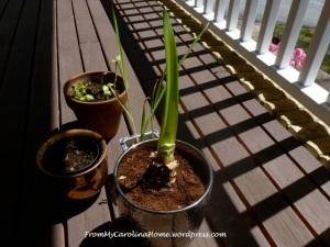 plants4.20.14a