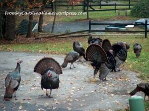 TurkeysBlog
