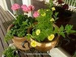 GeraniumsYellowbellflower
