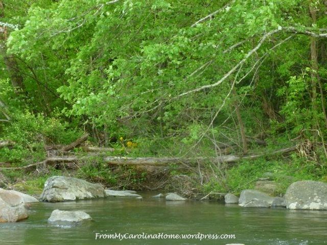 River |From My Carolina Home